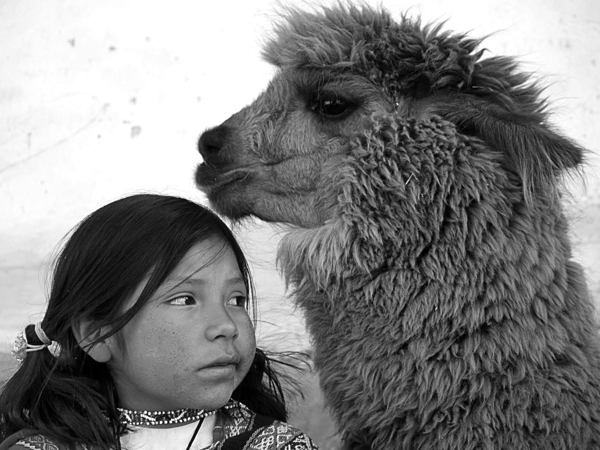 Peru girl Llama