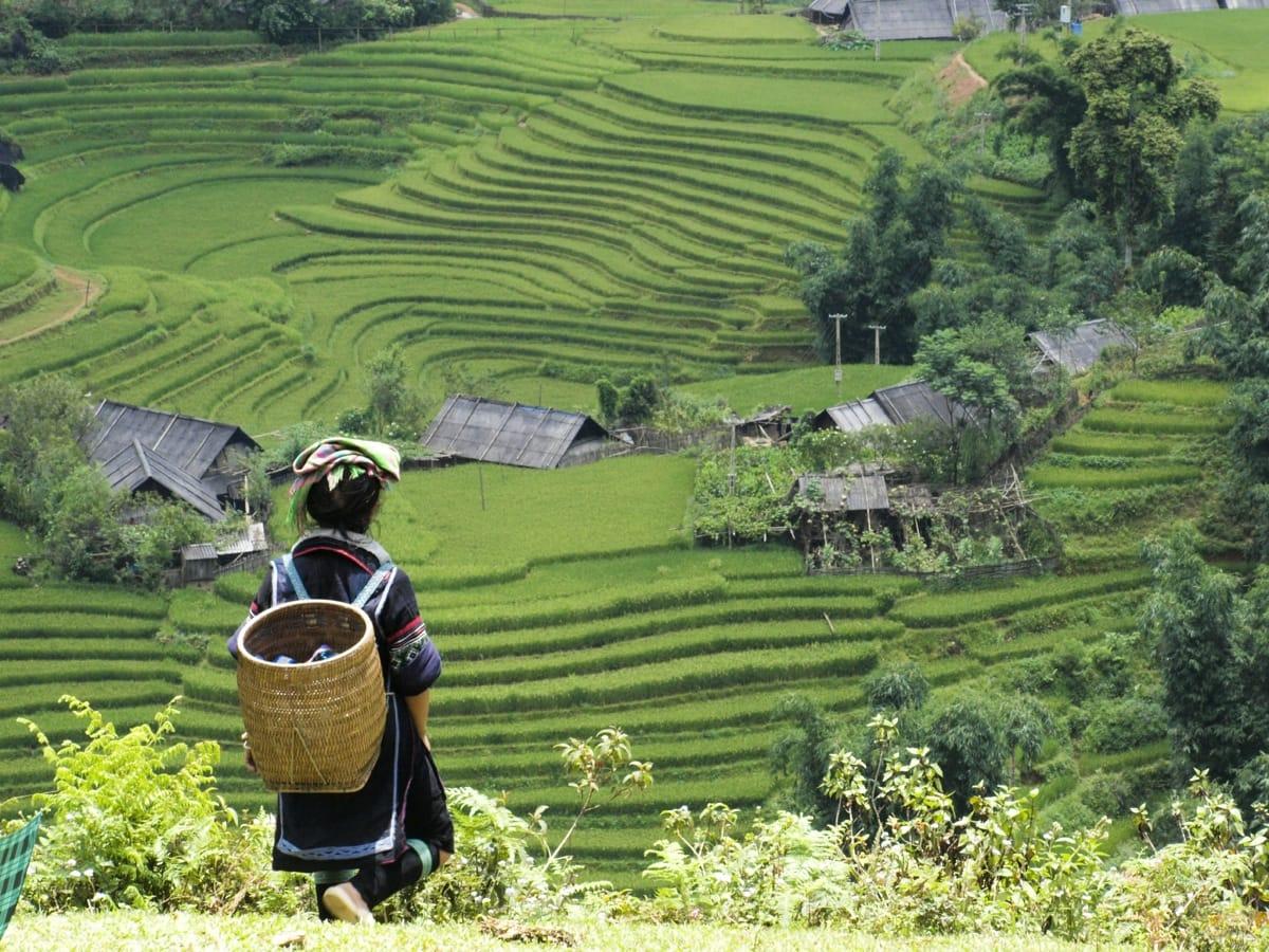 Vietnam rice fields Sapa