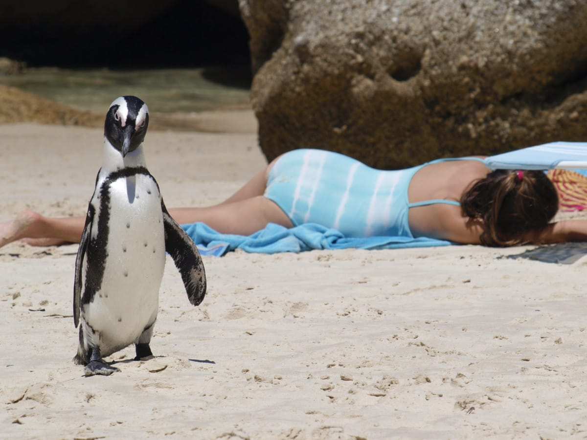 South Africa Penguins beach