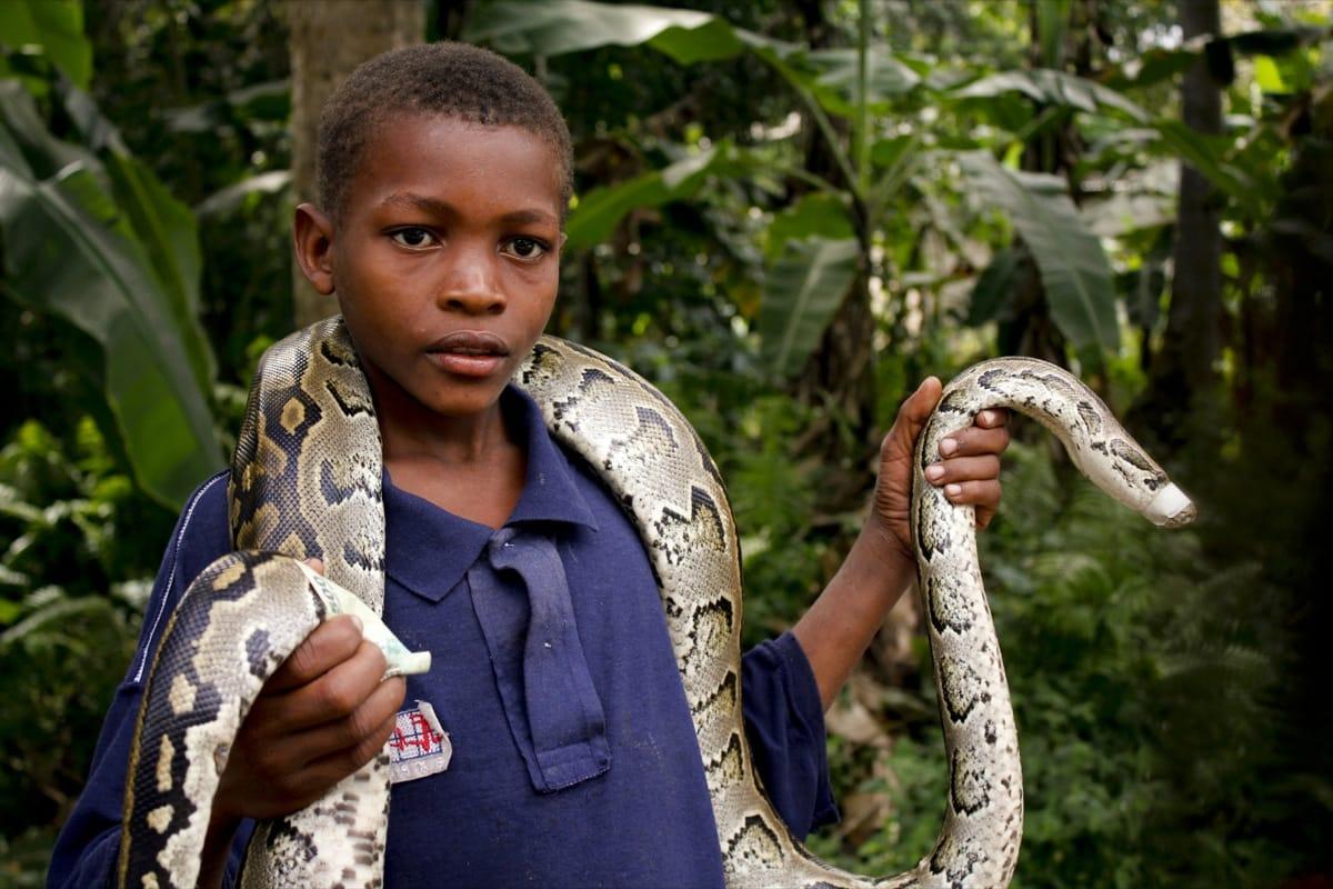 Zanzibar kid snake