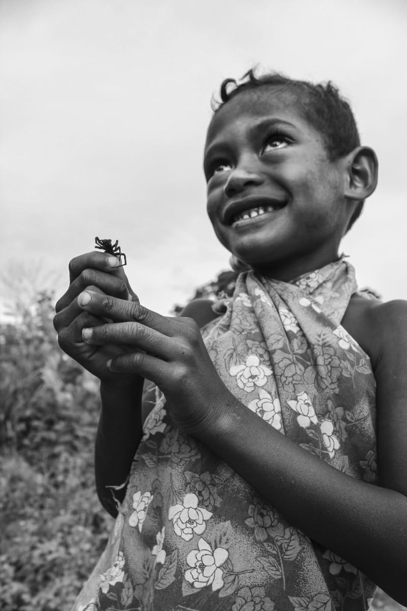 Papua New Guinea girl spider