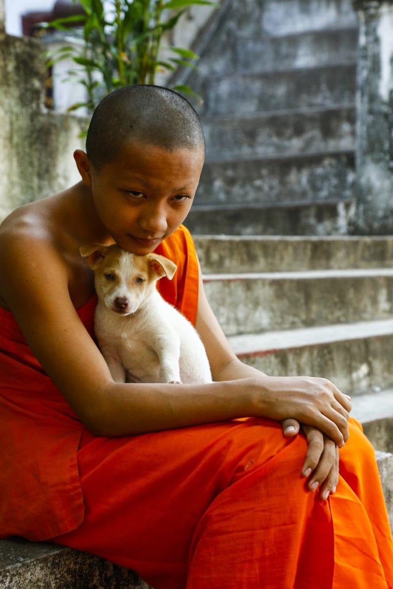Laos Monk dog Buddhism