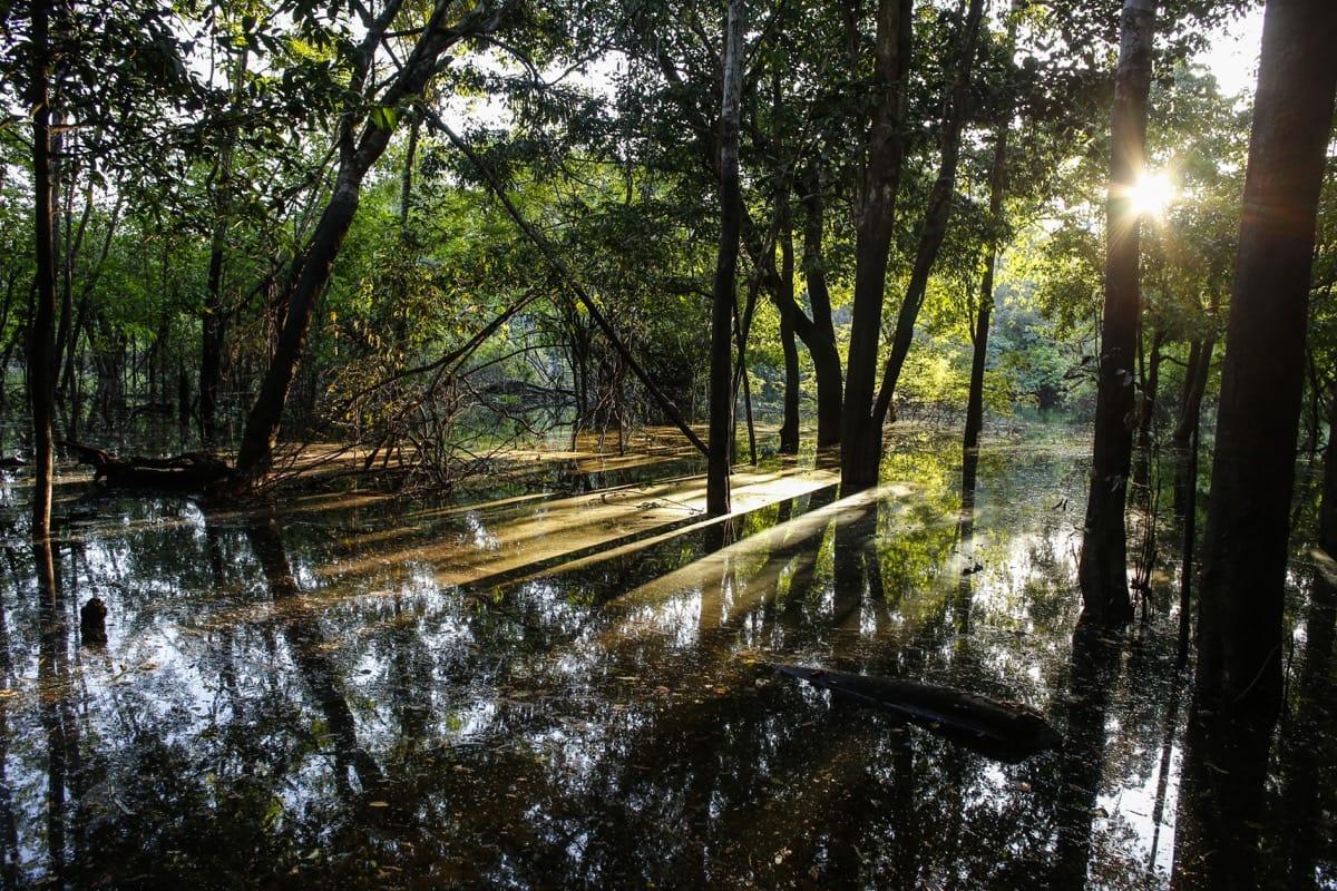 Brazil Amazon rainforest