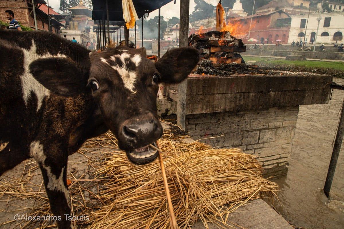 Nepal Pashupatinath temple cremation